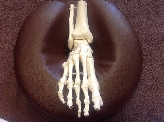 正常な足首