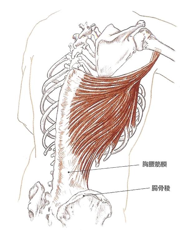 肩の痛みが腰の調整でとれた症例